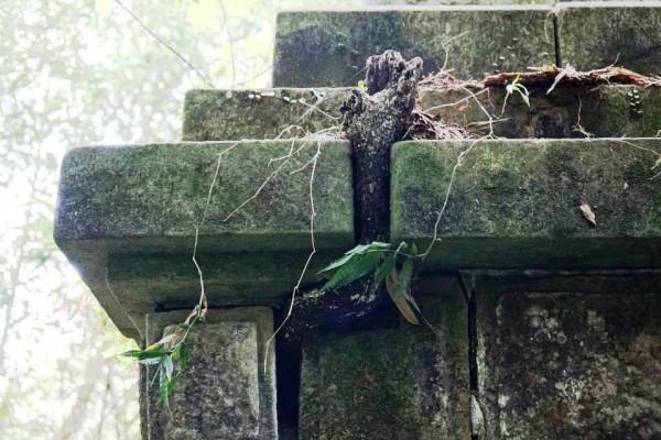 大豹忠魂碑遭蔓生植物侵擾而受損,亟需政府投入資源修復保存。(陳仲宇提供)