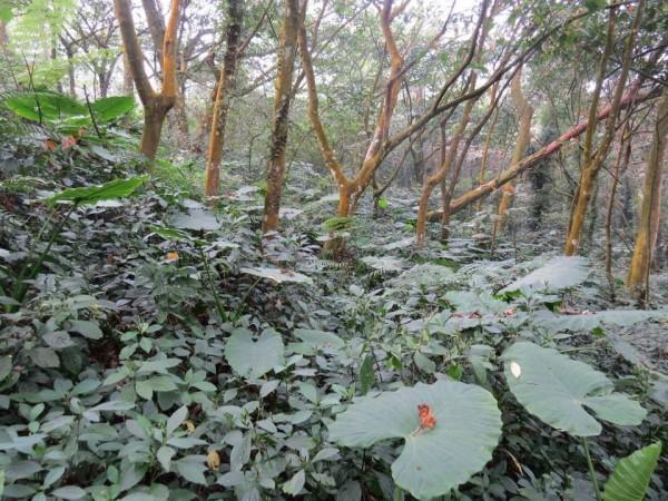 未遭破壞前的林地原貌。(陳清圳提供)