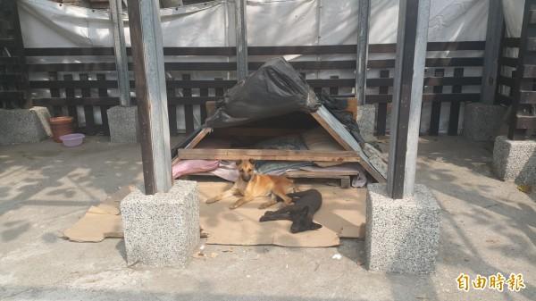 為了擔心狗狗承受不了寒流低溫,特別打造小木屋讓狗狗遮風避雨。(記者鄭旭凱攝)