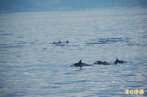 東海岸賞鯨豚活動起跑。(記者張存薇攝)
