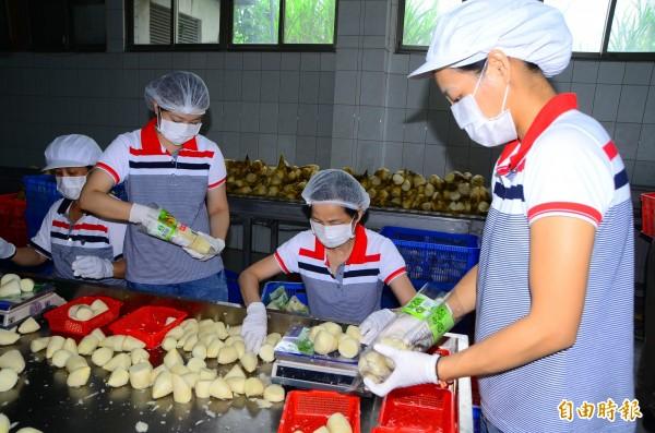 農會人員忙著將去殼的沙拉筍秤重、裝袋,生產線流程嚴謹。(記者吳俊鋒攝)