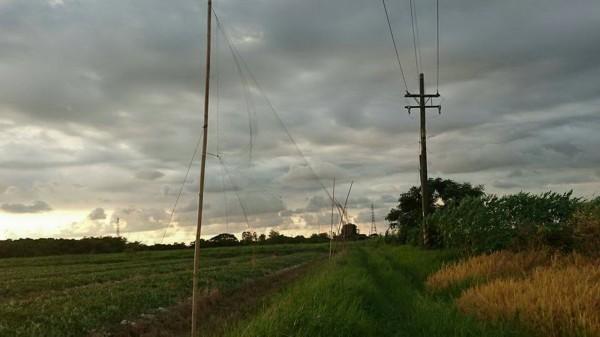 台南沙崙農場草鴞棲息地,四周竟遍佈捕鳥網。(林世忠提供)