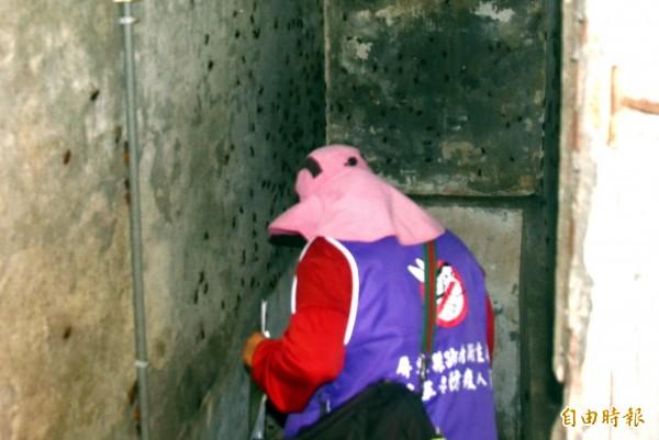 衛生局檢查人員進入牆壁滿是小強的地下室檢查相當辛苦(記者葉永騫攝)