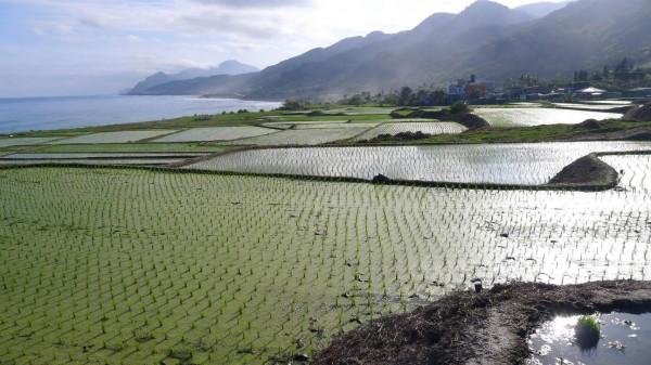 花蓮豐濱鄉新社村的里海地景,是由原住民聚落、海階水稻梯田、溪流、灌排溝渠和海岸所複合組成的農業生態系統。(照片由花蓮農改場提供)