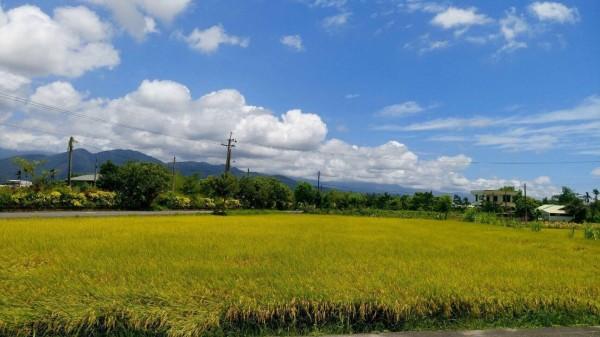 宜蘭三星鄉行健村的里地地景,是由農村聚落、平原水稻田、菜圃和灌排溝渠所複合組成的農業生態系統。(照片由花蓮農改場提供)