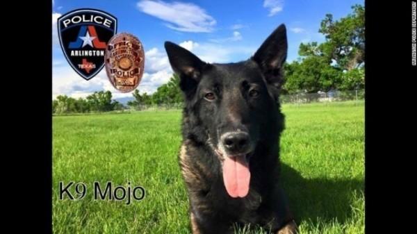 因中暑而不幸殉職的德州阿靈頓警犬「魔汁」。(取自CNN)