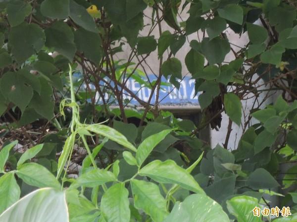 建國三村唯一僅存眷舍,牆壁上還留有國防部編號,但已被淹沒在荒煙蔓草中。(記者廖淑玲攝)