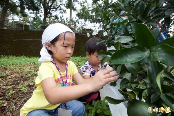 孩童隨家長包橘子,體驗當志工樂趣。(記者張軒哲攝)