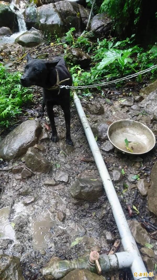 台灣土狗又稱高砂犬。(記者翁聿煌攝)
