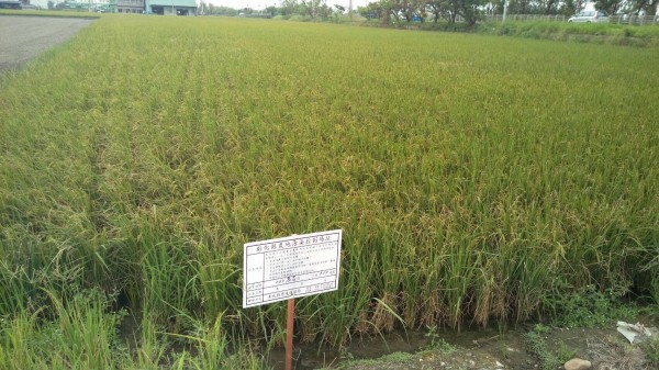 彰化縣環保局今對這些污染農田進行插牌動作,宣告正式列為農地污染控制場址。(彰化縣環保局提供)
