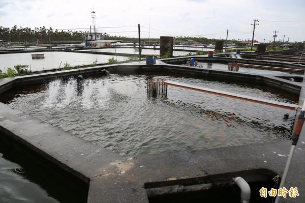 張家獨創八角池,讓養殖池內的紅魚存活率高達99%,且魚肉健康紮實。(記者邱芷柔攝)
