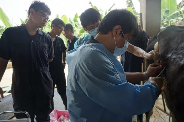 李旭薰帶著學生前往牧場,接觸牛隻臨床醫療與疾病預防。(屏科大獸醫系提供)