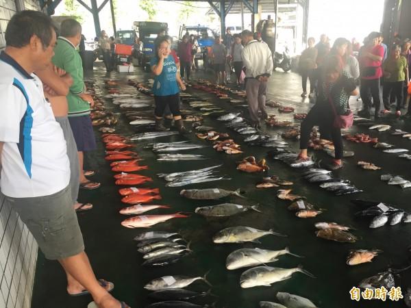 富岡漁市場漁獲滿滿,但鬼頭刀、旗魚都少。(記者張存薇攝)