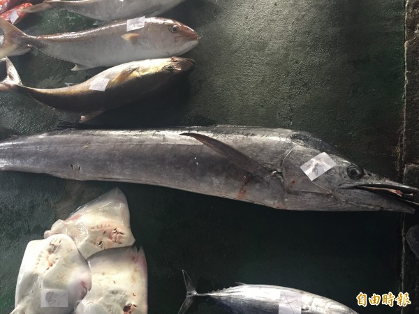 今年底旗魚捕獲量少。(記者張存薇攝)