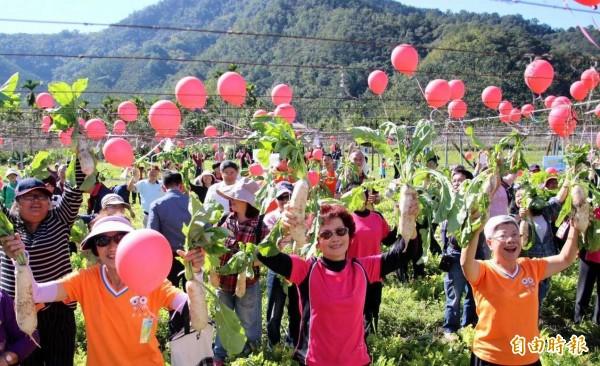南投縣魚池鄉蘿蔔節揭幕,活動將持續到明年2月9日止。(記者謝介裕攝)