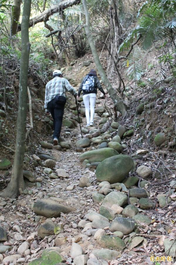 新埔飛龍步道登山口一路往上都是猶如大小西瓜般的卵石,這是因為步道原是野溪河床。(記者黃美珠攝)