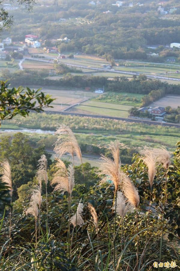 從飛龍步道景觀台眺望霄裡溪沿線田野。(記者黃美珠攝)