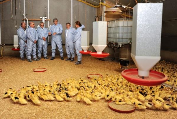 法國西南部部分地區5日起將撲殺鴨鵝。圖為法國農業部長勒弗爾(右3)去年5月在禽流感撲殺過後的復育期前往農場視察。(法新社)