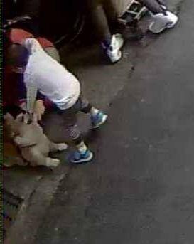 陳男說,是婦人蹲下來拉住小狗讓男童去摸,才造成男童被咬傷。(圖擷取自《爆料公社》)
