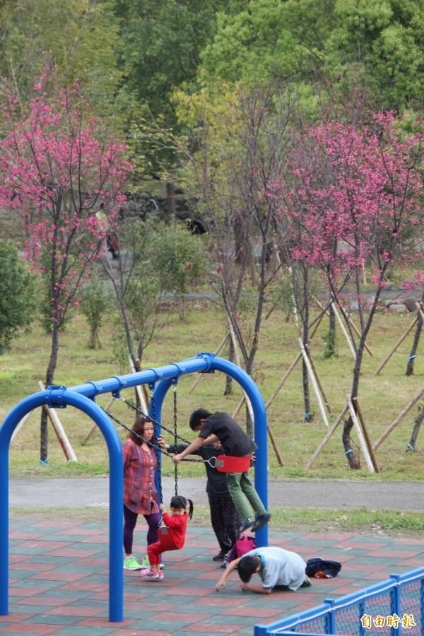 在粉色櫻花樹旁做運動,是今年起在竹東河濱生態公園的另一美麗場景。(記者黃美珠攝)