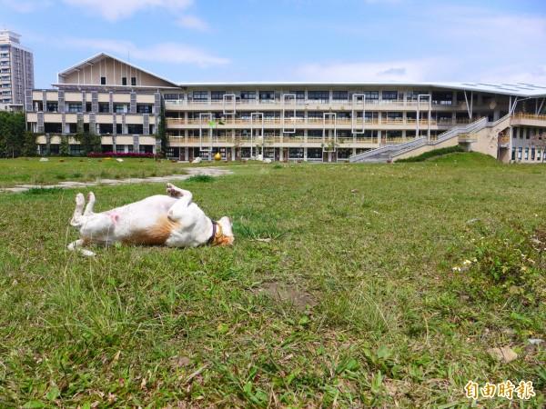 三重商工工科大樓前大草坪占地面積達1.2公頃,綠意盎然、氛圍悠閒,許多學生、校友特別喜歡這個校園角落。(記者李雅雯攝)