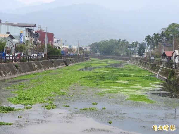 明年南投燈會計畫利用埔里鎮杷城排洪道規劃水上燈區,但目前河面常飄浮垃圾、遍布布袋蓮,民眾認為環境待整頓。(記者佟振國攝)