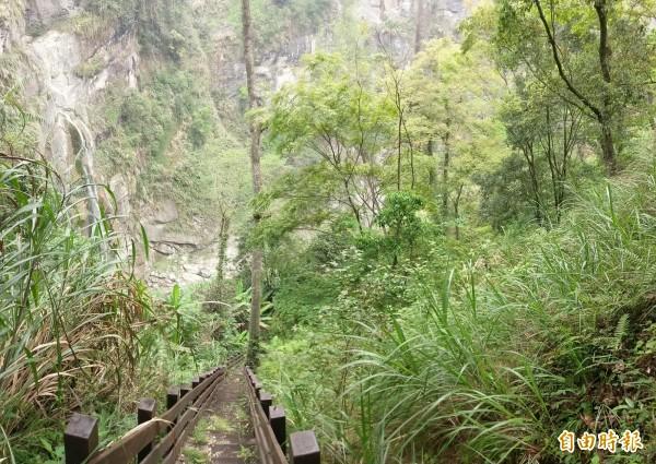 信義鄉秘境水濂洞瀑布,步道終點因階梯過陡,縣府將設置觀瀑大平台,以利賞景。(記者劉濱銓攝)