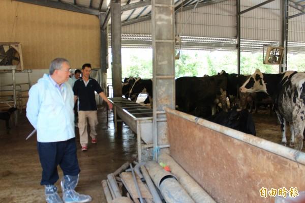 新竹縣長邱鏡淳(前左)今天參觀酪農戶魏春富(右)的乳牛場,對於他的現代化管理,兼顧環保、回收的牧場設施,留下深刻印象。(記者黃美珠攝)