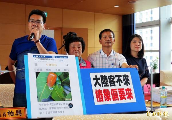 議員蘇柏興、張瀞分、賴朝國、張廖乃綸(由左至右)指出,荔枝椿象已入侵公園、學校。(記者張菁雅攝)