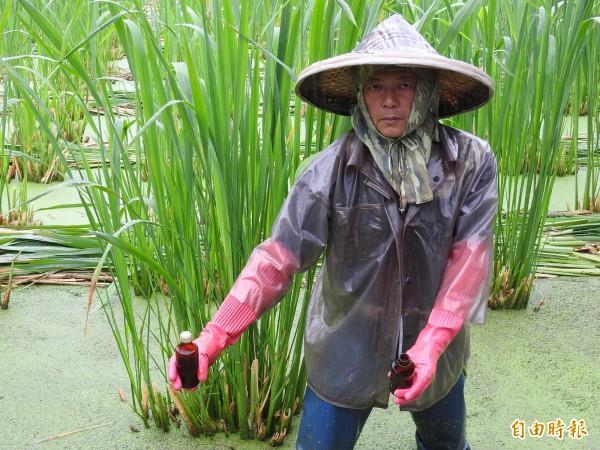 農民最怕玻璃瓶的提神飲料飛進田裡,被砸中後果不堪設想。(記者佟振國攝)