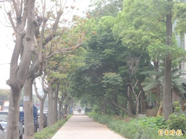 湖口鄉公所改善光復路人行步道,拓寬步道並整頓綠帶,完工後吸引許多民眾前往散步,並稱許是新竹工業區的示範道路。(記者廖雪茹攝)