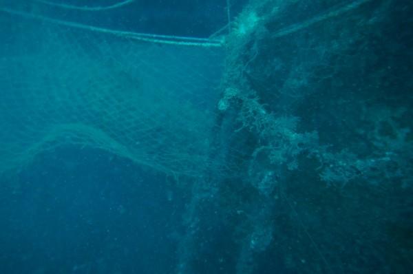 岩礁遭廢漁網纏繞。(高雄市府提供)