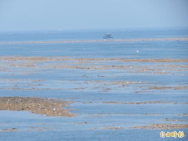 北部海岸線出現大量漂流木及垃圾。(記者林欣漢攝)