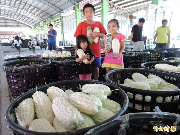 台東市果菜市場苦瓜及絲瓜盛產。(記者張存薇攝)