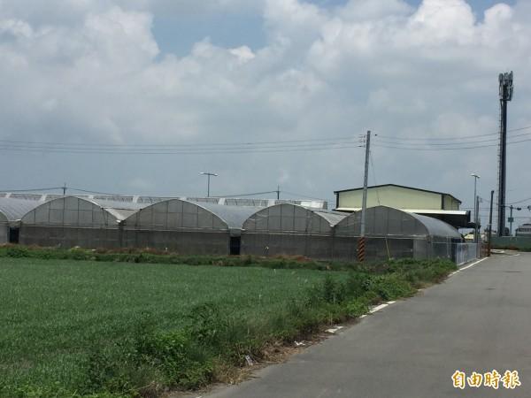 彰化縣農會在二林中科園區大排沙農場附近設置的網溫室栽培區。(記者張聰秋攝)