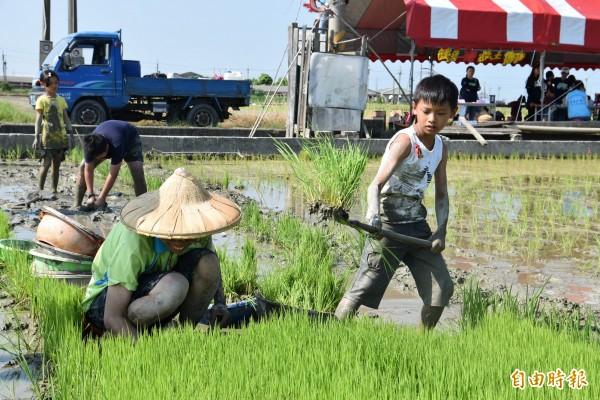 守護土地蝠氣稻活動,小朋友下田親身體驗農夫辛勞。(記者黃淑莉攝)