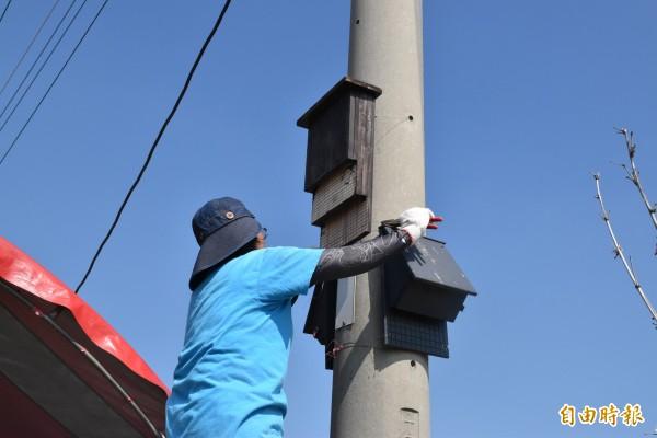 雲林黃金蝙蝠館志工在稻田旁懸掛蝙蝠屋。(記者黃淑莉攝)