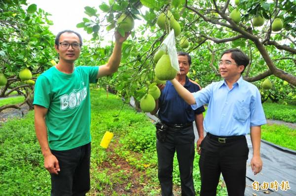 游振葦和爸爸帶著農糧署東區分署副分署長陳吉村(右)參觀果園,走進園區內長滿各種草,營造生物多樣棲地。(記者花孟璟攝)
