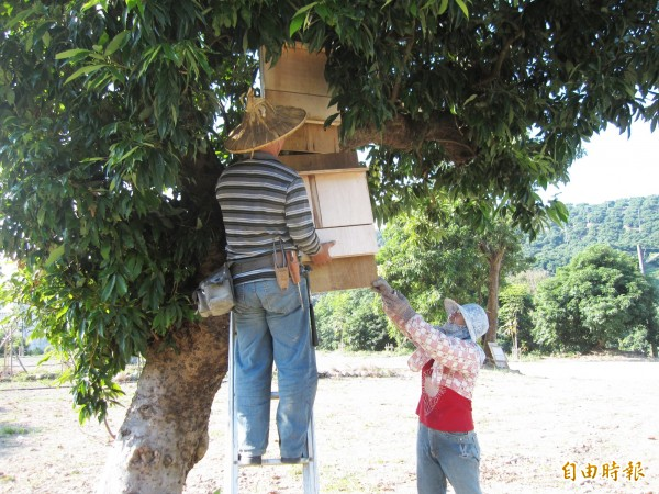 居民製作蝙蝠小木屋,掛在樹下及屋簷下,供蝙蝠棲息。(記者陳文嬋攝)