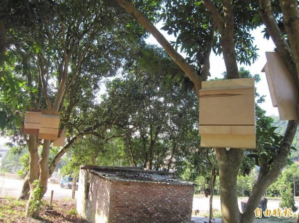 居民製作「蝙蝠專用摩鐵」,掛在樹下下供蝙蝠棲息。(記者陳文嬋攝)