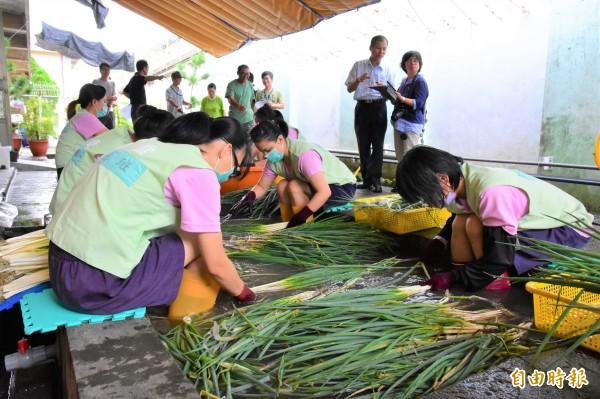 宜蘭監獄開辦安農洗蔥班,由在監紀錄良好的受刑人協助蔥農洗蔥,每人每月可獲得勞作金。(記者張議晨攝)
