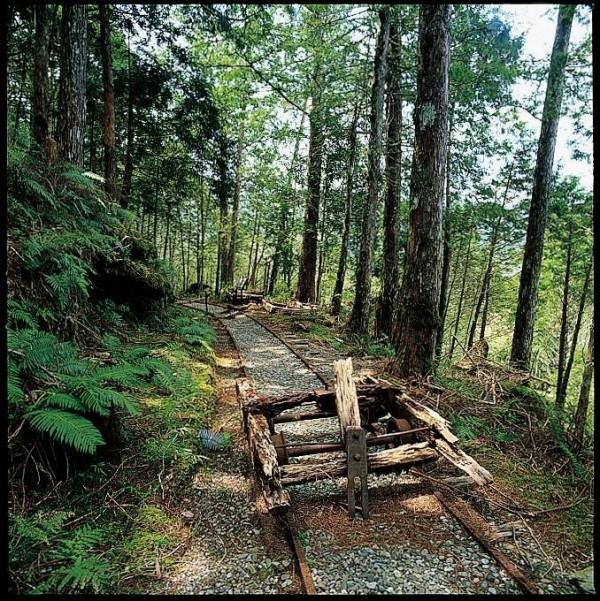 太平山森林遊樂區內的見晴步道,在網路拉抬下,近年成為園區內的熱門景點。(羅東林管處提供)