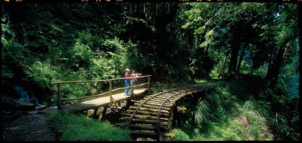 太平山森林遊樂區的見晴步道近年爆紅。(羅東林管處提供)