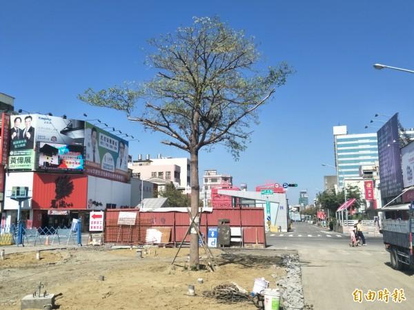 市民質疑樹種為小葉欖仁的行道樹,恐怕會導致地下停車場淹水。(記者邱灝唐攝)