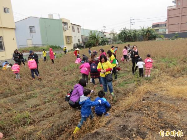 台中市農會在大肚舉辦「尋農紀」,210位小朋友一起下田摘黃豆,喝豆漿。(記者蘇金鳳攝)
