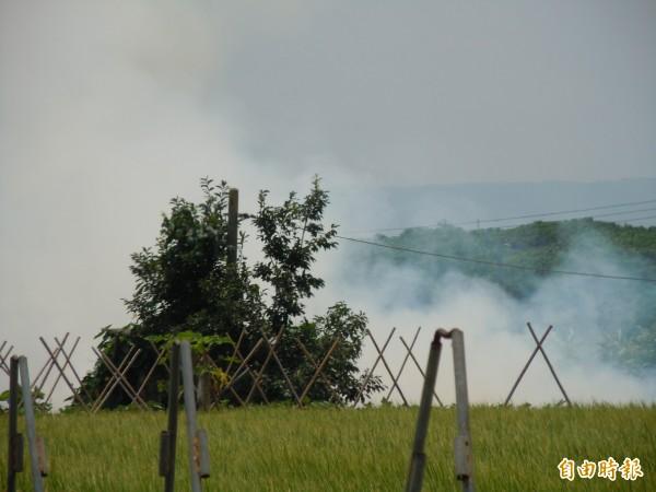 彰化縣今年已開出16張偷燒稻草違反空污的罰單。(記者張聰秋攝)