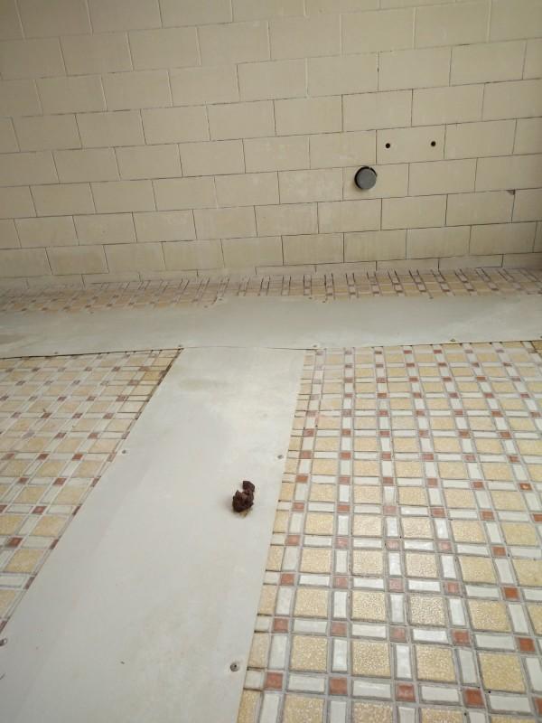 衛生局人員訪查時在走道上發現糞便痕跡。(圖衛生局提供)