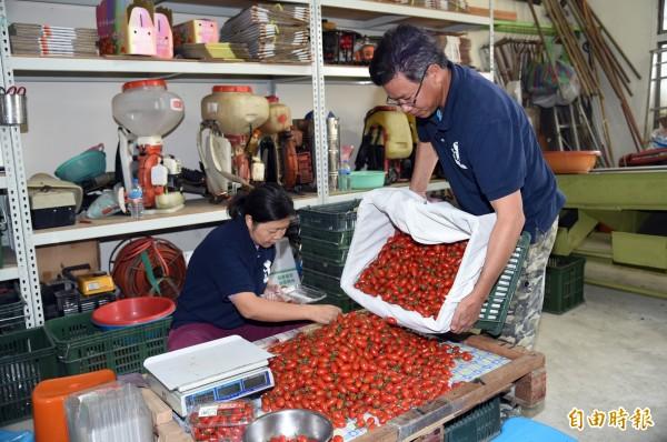 美濃子弟蕭成龍考慮雙親年邁,與妻子商量後退役返鄉打造有機農作。(記者張忠義攝)