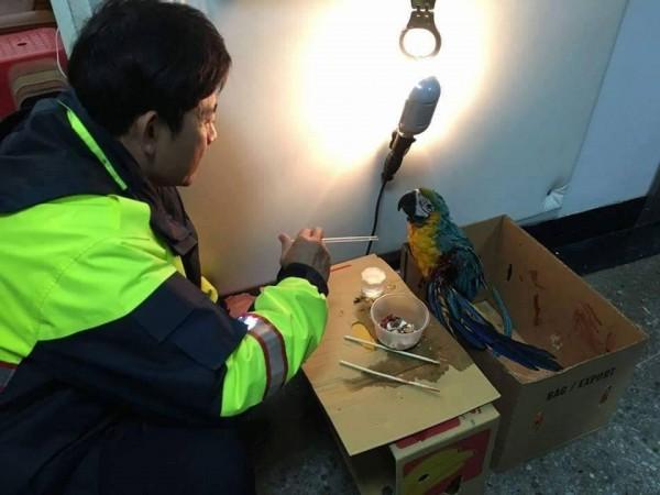 員警細心照顧受傷的鸚鵡,助牠度過寒冷的冬夜。(記者黃佳琳翻攝)