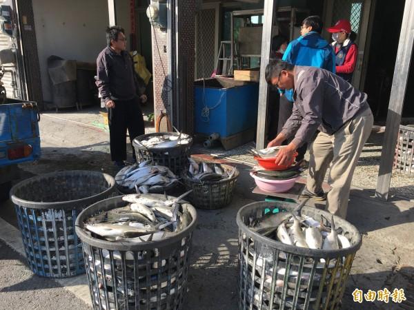 超級寒流今天清晨發威,雲林沿海低溫5、6度台西、口湖文蛤池混養的虱目魚凍死,漁民便宜賣給盤商。(記者黃淑莉攝)